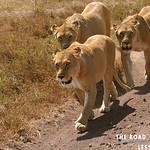 https://roadlesstraveled.smugmug.com/Website-Photos/Website-Galleries/Watermarked-Africa-Tanzania-/i-ZSFTCQk