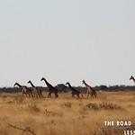 https://roadlesstraveled.smugmug.com/Website-Photos/Website-Galleries/Watermarked-Africa-Tanzania-/i-bMhFmXz