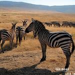https://roadlesstraveled.smugmug.com/Website-Photos/Website-Galleries/Watermarked-Africa-Tanzania-/i-cG3Jj7T