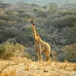 https://roadlesstraveled.smugmug.com/Website-Photos/Website-Galleries/Watermarked-Africa-Tanzania-/i-gjCWBw4