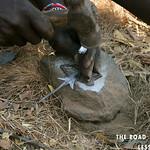 https://roadlesstraveled.smugmug.com/Website-Photos/Website-Galleries/Watermarked-Africa-Tanzania-/i-hBp23MC