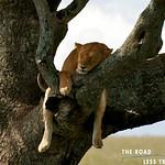 https://roadlesstraveled.smugmug.com/Website-Photos/Website-Galleries/Watermarked-Africa-Tanzania-/i-m23SJCH