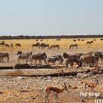 https://roadlesstraveled.smugmug.com/Website-Photos/Website-Galleries/Watermarked-Africa-Tanzania-/i-mWCJzBg