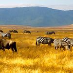 https://roadlesstraveled.smugmug.com/Website-Photos/Website-Galleries/Watermarked-Africa-Tanzania-/i-pMJhzgW