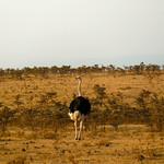 https://roadlesstraveled.smugmug.com/Website-Photos/Website-Galleries/Watermarked-Africa-Tanzania-/i-q2gmMJw