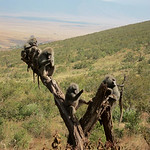 https://roadlesstraveled.smugmug.com/Website-Photos/Website-Galleries/Watermarked-Africa-Tanzania-/i-q5snjmv