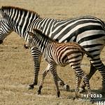 https://roadlesstraveled.smugmug.com/Website-Photos/Website-Galleries/Watermarked-Africa-Tanzania-/i-zgPB3jd