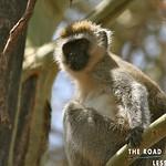 https://roadlesstraveled.smugmug.com/Website-Photos/Website-Galleries/Watermarked-Africa-Tanzania-/i-zsHBWG7