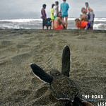 https://roadlesstraveled.smugmug.com/Website-Photos/Website-Galleries/Watermarked-Availabilit-Updat/i-tbhfGxT