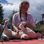 https://roadlesstraveled.smugmug.com/Website-Photos/Website-Galleries/Watermarked-Colorado-CotW/i-6F6NqC9