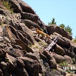 https://roadlesstraveled.smugmug.com/Website-Photos/Website-Galleries/Watermarked-Colorado-CotW/i-9WG4Bnv