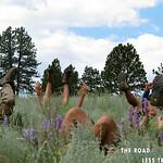 https://roadlesstraveled.smugmug.com/Website-Photos/Website-Galleries/Watermarked-Colorado-CotW/i-FHmM8V3