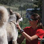 https://roadlesstraveled.smugmug.com/Website-Photos/Website-Galleries/Watermarked-Colorado-CotW/i-XnS8Cns