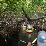 https://roadlesstraveled.smugmug.com/Website-Photos/Website-Galleries/Watermarked-Dutch-Caribbean/i-4FWWCh6