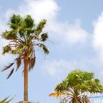 https://roadlesstraveled.smugmug.com/Website-Photos/Website-Galleries/Watermarked-Dutch-Caribbean/i-Ggb376C