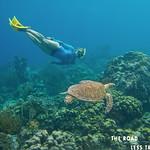https://roadlesstraveled.smugmug.com/Website-Photos/Website-Galleries/Watermarked-Dutch-Caribbean/i-XWVXpLx