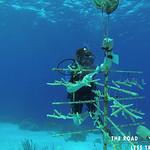 https://roadlesstraveled.smugmug.com/Website-Photos/Website-Galleries/Watermarked-Dutch-Caribbean/i-gNhbQws