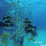 https://roadlesstraveled.smugmug.com/Website-Photos/Website-Galleries/Watermarked-Dutch-Caribbean/i-mFcHpSC