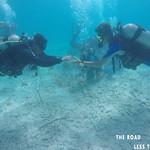 https://roadlesstraveled.smugmug.com/Website-Photos/Website-Galleries/Watermarked-Dutch-Caribbean/i-srscnSm