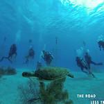 https://roadlesstraveled.smugmug.com/Website-Photos/Website-Galleries/Watermarked-Dutch-Caribbean/i-zZMFgdD