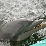 https://roadlesstraveled.smugmug.com/Website-Photos/Website-Galleries/Watermarked-Florida-Keys-Web-P/i-HQhN7rN