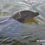 https://roadlesstraveled.smugmug.com/Website-Photos/Website-Galleries/Watermarked-Florida-Keys-Web-P/i-ZwTQ5hv