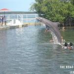 https://roadlesstraveled.smugmug.com/Website-Photos/Website-Galleries/Watermarked-Florida-Keys-Web-P/i-wst4VpB