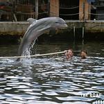 https://roadlesstraveled.smugmug.com/Website-Photos/Website-Galleries/Watermarked-Florida-Keys-Web-P/i-zxz75Cn