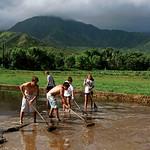 https://roadlesstraveled.smugmug.com/Website-Photos/Website-Galleries/Watermarked-Hawaii-Ahola-Aina/i-ktCm9sq