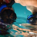https://roadlesstraveled.smugmug.com/Website-Photos/Website-Galleries/Watermarked-Hawaii-Ahola-Aina/i-pWfT8nq