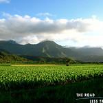 https://roadlesstraveled.smugmug.com/Website-Photos/Website-Galleries/Watermarked-Hawaii-Ahola-Aina/i-wcQ98dg