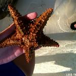 https://roadlesstraveled.smugmug.com/Website-Photos/Website-Galleries/Watermarked-Los-Cayucos-Web-Ph/i-Cmzg882
