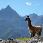https://roadlesstraveled.smugmug.com/Website-Photos/Website-Galleries/Watermarked-Peru-Pachamama/i-MSKVkS2