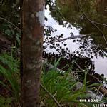 https://roadlesstraveled.smugmug.com/Website-Photos/Website-Galleries/Watermarked-Pura-Vida-Web-Gall/i-2RV78s7