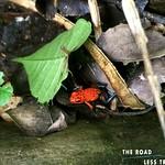 https://roadlesstraveled.smugmug.com/Website-Photos/Website-Galleries/Watermarked-Pura-Vida-Web-Gall/i-93P7Bg9