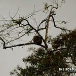 https://roadlesstraveled.smugmug.com/Website-Photos/Website-Galleries/Watermarked-Vistamar-Web-Photo/i-C9DdGV3