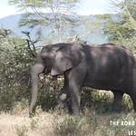 https://roadlesstraveled.smugmug.com/Website-Photos/Website-Galleries/Watermarked-Africa-Tanzania-/i-FMKRd3b