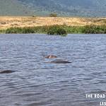 https://roadlesstraveled.smugmug.com/Website-Photos/Website-Galleries/Watermarked-Africa-Tanzania-/i-nRhQMtc